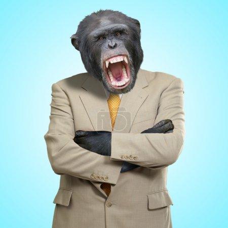 Photo pour Gorille en colère en costume sur fond bleu - image libre de droit