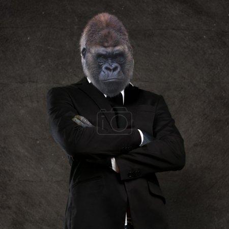 Gorilla businessman wearing a black suit
