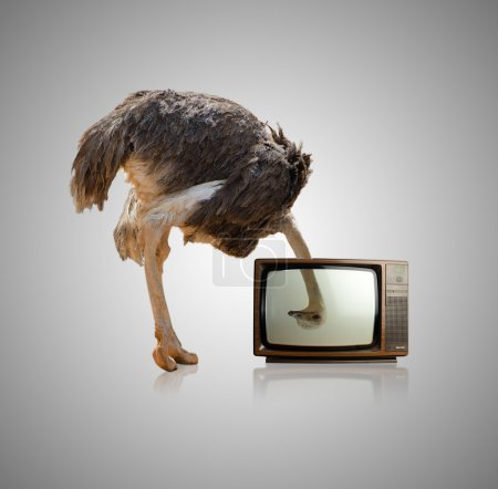 Photo for Ostrich Looking Through Television On Gray Background - Royalty Free Image