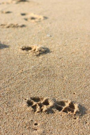 Dog Footprints on the Sand