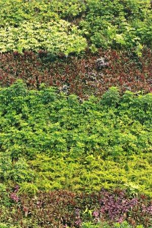 Vertical garden natural green leaf texture