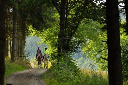 Photo for On a horse ride in an forest in the Belgian Ardennes - Royalty Free Image