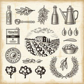 A set of fully editable vintage olive harvest elements in woodcut style EPS10 vector illustration with clipping mask