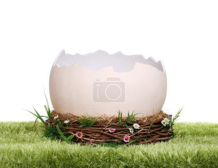 Prop egg shell