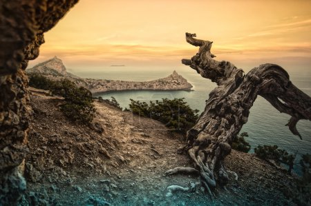 Photo pour Arbre mort dans les montagnes de la mer, la Crimée - image libre de droit