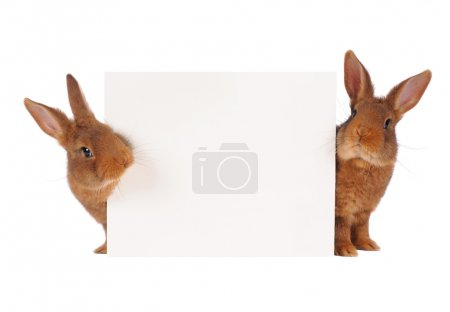 Photo for Two rabbit with sheet for a text writing - Royalty Free Image
