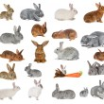 Rabbit a on white background...