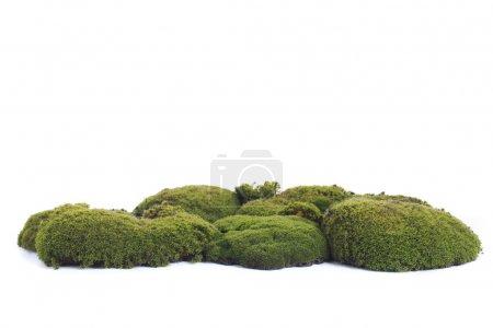 Photo pour Mousse verte sur fond blanc - image libre de droit
