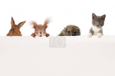 Photo for Animals on a white background - Royalty Free Image