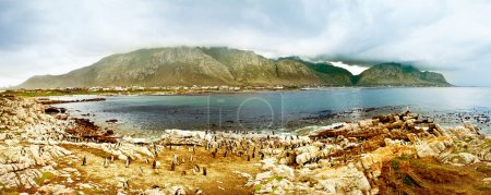 Panoramic landscape with penguins