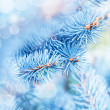 Photo of frozen fir tree background, branches of e...