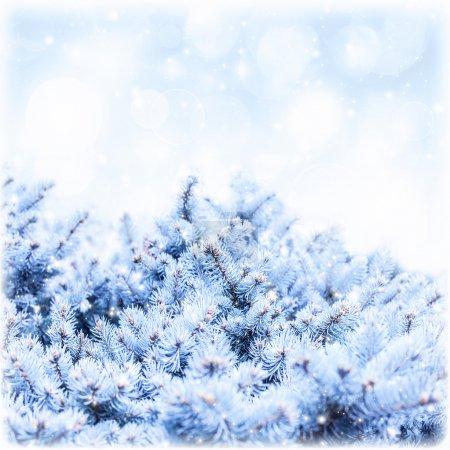 Photo pour Photo de branche de sapin recouvert de neige blanche sur fond de ciel bleu, rime sur frontière arbre pin, décor floral hiver, carte de voeux de nouvel an, espace copie, forêt enneigée, vacances d'hiver, carte de voeux - image libre de droit