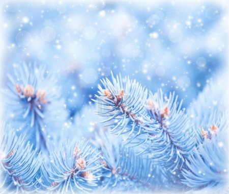 Image of fir tree covered hoar background, conifer...
