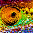 Photo of colorful reptilian eye, closeup head part...