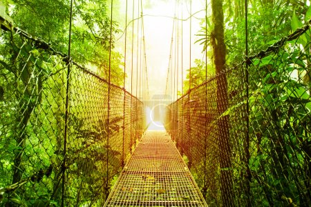 Photo for Picture of Arenal Hanging Bridges Ecological reserve, natural rainforest park, La Fortuna de San Carlos city, Costa Rica, Central America, footbridge in jungle, travel and tourism concept - Royalty Free Image