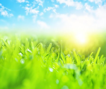 Photo for Picture of beautiful green grass field and clear blue sky with bright sunlight, selective focus, wonderful landscape, spring season, rural place, nature outdoors, meadow in countryside - Royalty Free Image