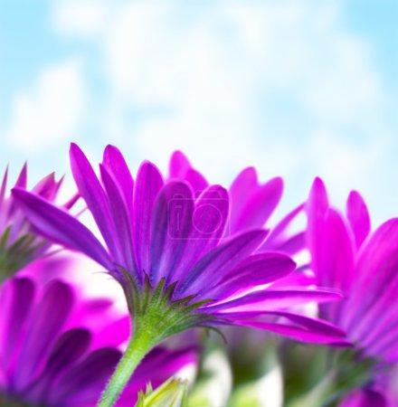 Flores púrpuras sobre el cielo azul