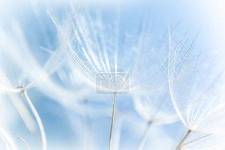 Foto de Macro de fondo de diente de león abstracto, detalle de la naturaleza, temporada de primavera, flores en flor, enfoque suave - Imagen libre de derechos