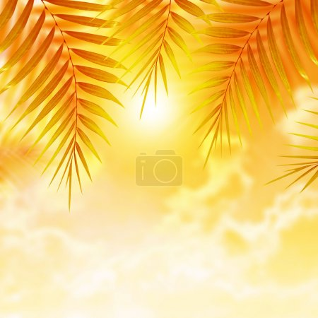 Palm leaves on sunset background