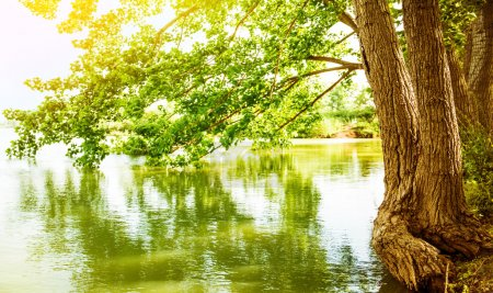 Photo pour Paysage de belle rivière, reflet du grand arbre en eau calme, nature de la forêt, plein soleil jaune, scène paisible, saison printemps - image libre de droit