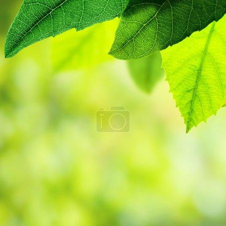 Green leaves border