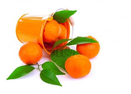 Photo pour Orange seau métallique avec mandarines fraîches chute vers le bas, savoureux agrumes mûrs dispersés sur fond blanc, tropicales fruits pleins de vitamines - image libre de droit