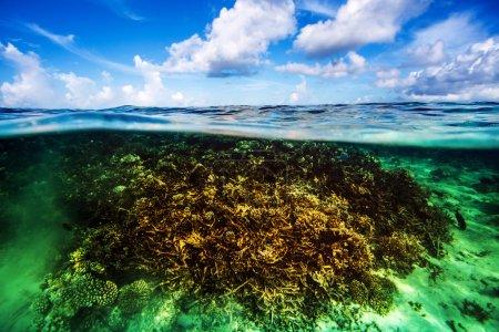 Photo pour Beau jardin de corail sous l'eau, plongée sur maldives, bleu ciel nuageux, eau turquoise, vacances de luxe, beauté de la nature sauvage - image libre de droit
