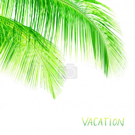 Photo for Palm tree leaves border, fresh green exotic foliage isolated on white background, element of tropical nature, copy space, summer vacation concept - Royalty Free Image
