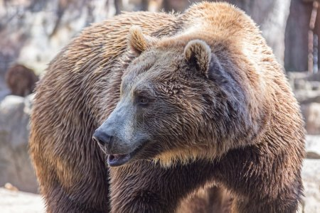 brown bear sitting so funny