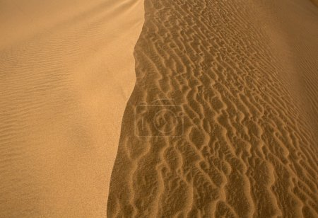 Desert dunes in Maspalomas Gran Canaria