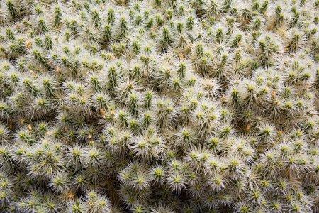 Lanzarote Guatiza cactus garden in Canaries