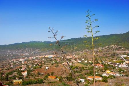La Palma Caldera Tabueirnte mountain with agave