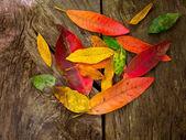 automne chute rouge or feuilles séchées