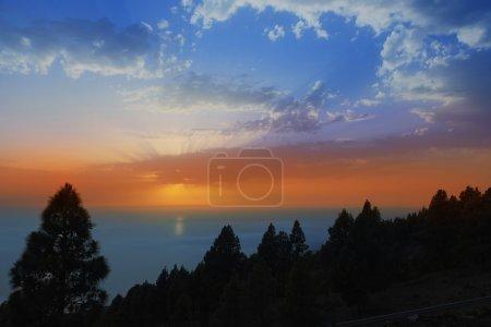 Photo pour Rétroéclairage pin Canaries la palma dans les îles canaries ciel coucher de soleil - image libre de droit