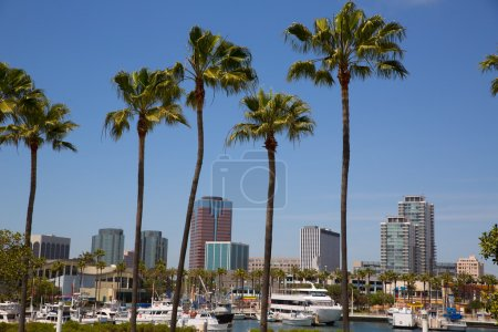 Photo for Long Beach California skyline with palm trees from marina port USA - Royalty Free Image
