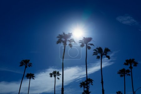 Palm trees in southern California Newport area