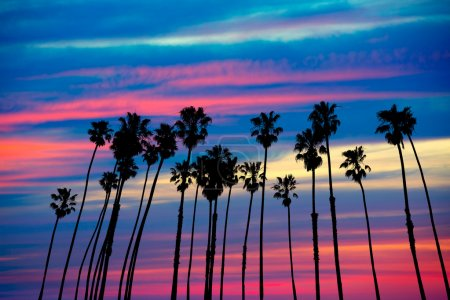 Photo for California palm trees group sunset with colorful sky - Royalty Free Image