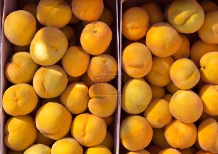Calanda peaches rainfed from Teruel Spain
