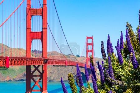 Photo pour Golden Gate Bridge San Francisco fleurs violettes Echium candicans en Californie - image libre de droit