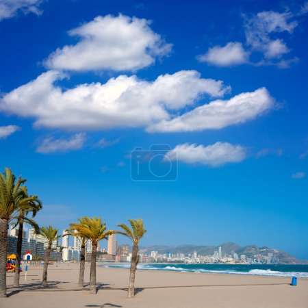 Benidorm Alicante beach palm trees and Mediterranean