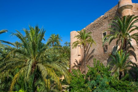 Elche Elx Alicante el Palmeral Palm trees Park and Altamira Pala