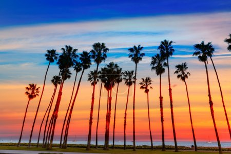 Photo for California sunset Palm tree rows in Santa Barbara US - Royalty Free Image