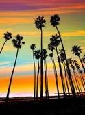 Kalifornie slunce palm tree řádky v santa Barbaře
