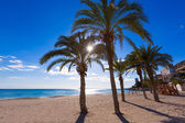 Alicante San Juan beach of La Albufereta with palms trees