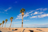 Valencia Malvarrosa Las Arenas beach palm trees in Patacona