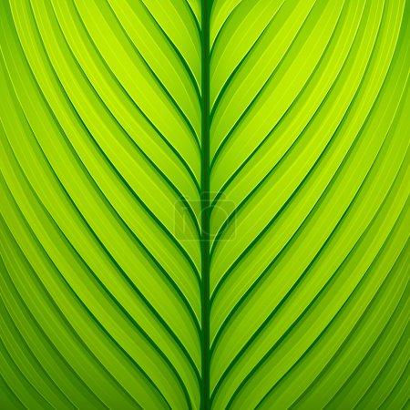 Illustration for Texture of a green leaf. Vector illustration - Royalty Free Image