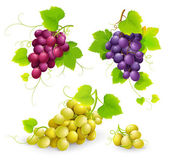 Bunches of grapes on a white background Vector illustration