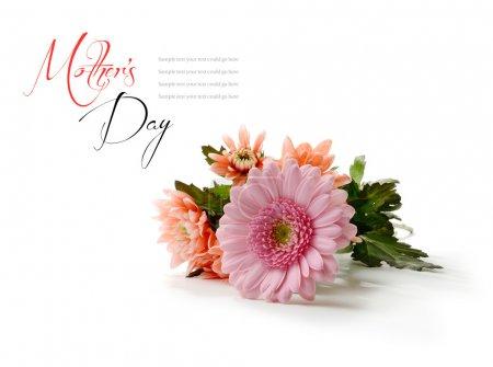 Photo pour Macro de Studio de fleurs fête des mères avec des ombres douces sur un fond blanc. espace copie. - image libre de droit