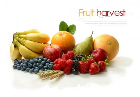 A Fruit Harvest