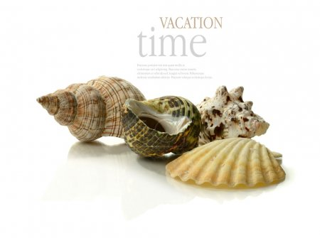 Photo for A vacation and holiday concept image. A selection of exotic seashells grouped together against a white background with soft reflections. Copy space. - Royalty Free Image